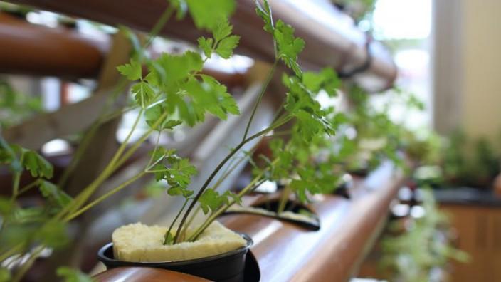 Pflanzenzucht: Gärtnern auf Schaumstoff