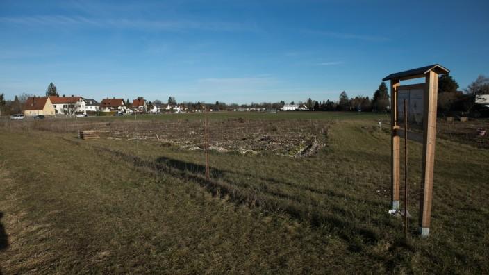 Erdbeerenwiese in Allach, 2020