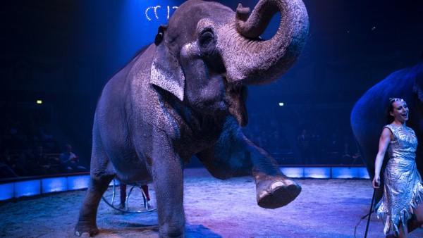 Winterpremiere im Circus Krone in München, 2020