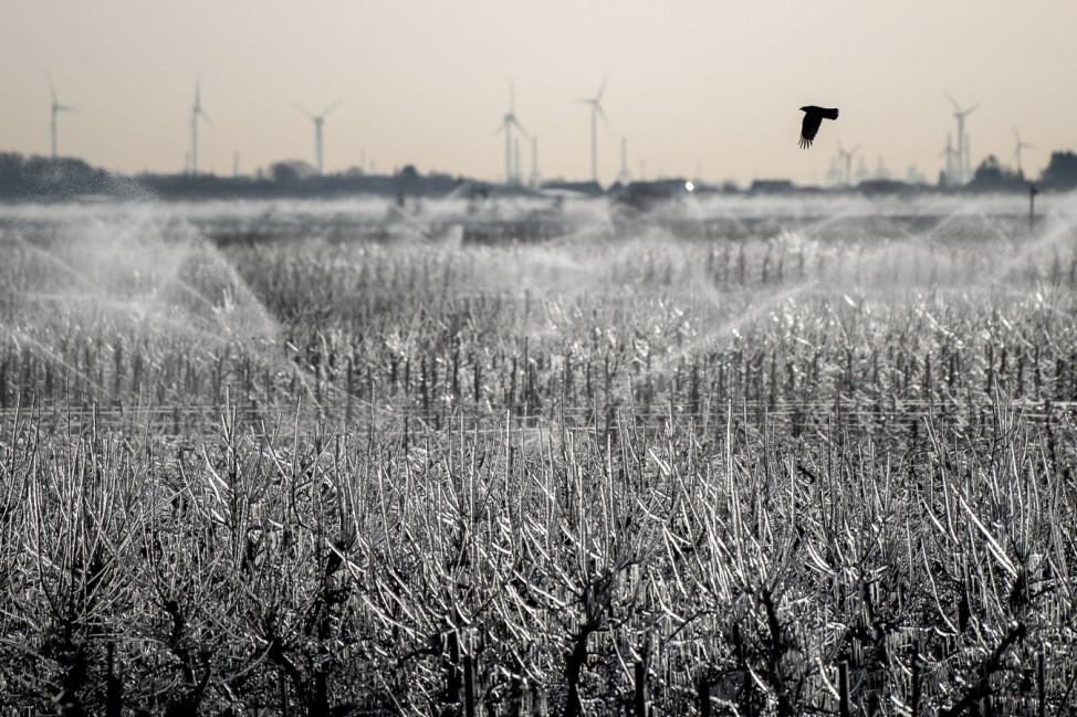 Eiskaltes Wetter im Alten Land