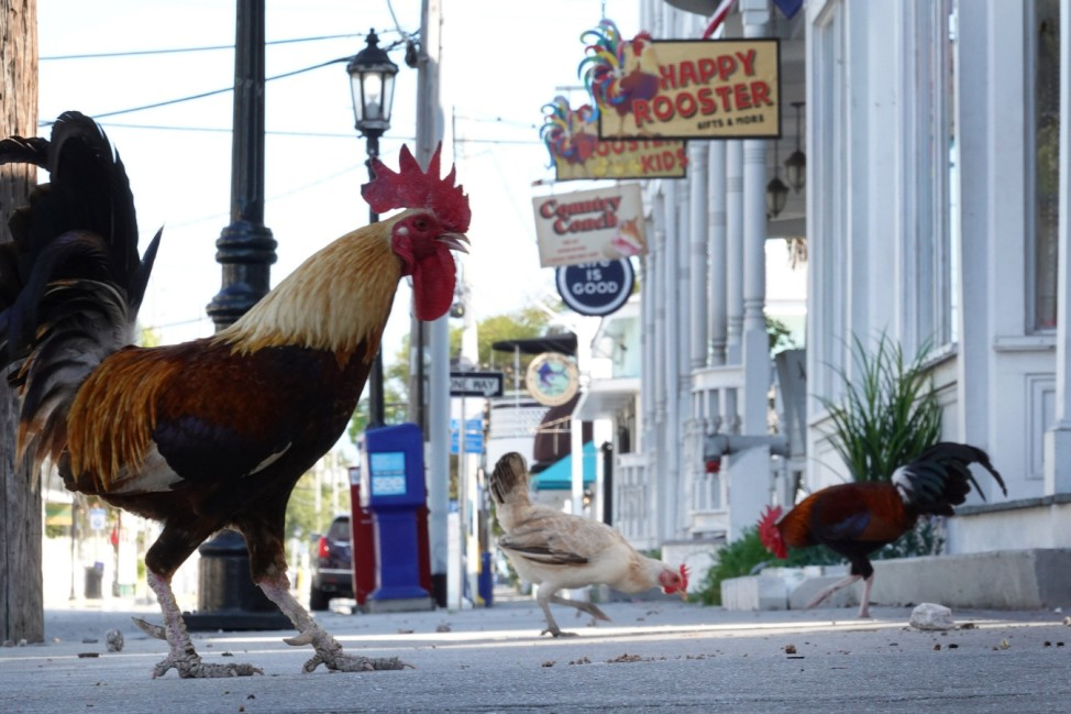 Key West Faces Tough Economic Road As Coronavirus Closures Affect Tourism