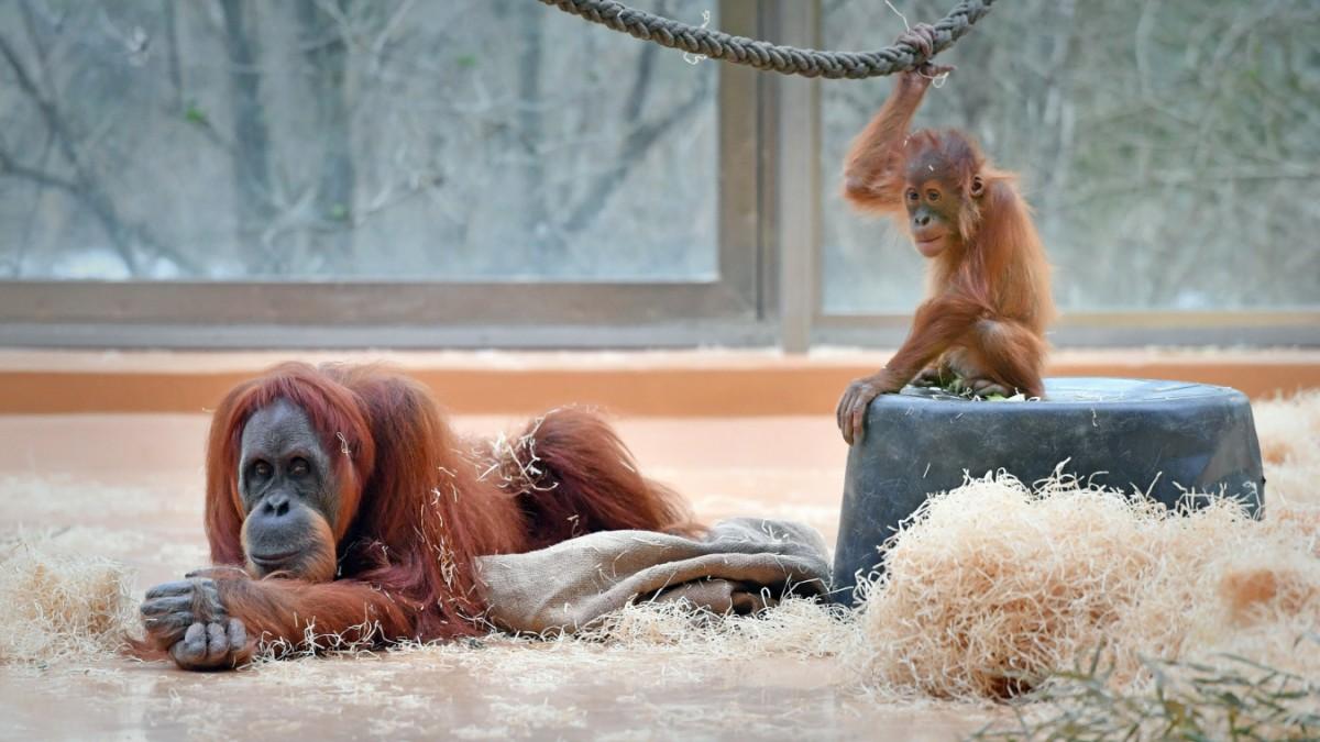 Tierparks in Zeiten von Corona
