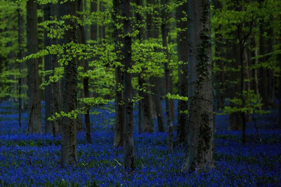 Frühling in Belgien