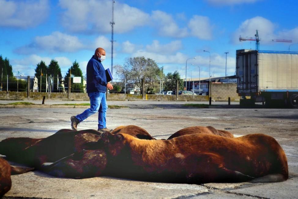 Coronavirus - Wildtiere erobern in Corona-Zeiten die Städte