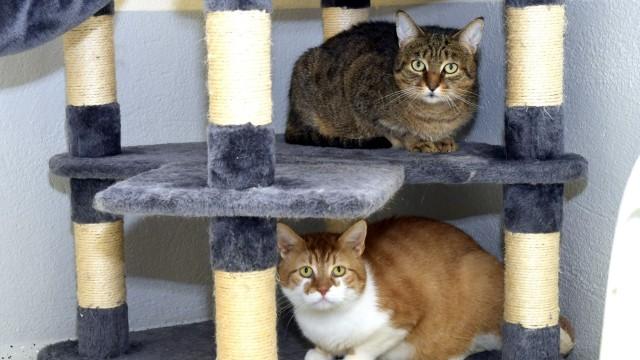 Tierheim Erding: Albert und Richard sind noch etwas scheu, sie werden aber an Tierliebhaber vermittelt.