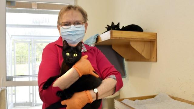 Tierheim Erding: Zehn schwarze Kätzchen sind in der Vermittlung, von denen Solveig Wanninger eines auf dem Arm hält.