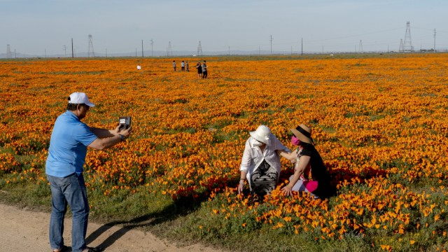 Residents Flock To See Spring Wildflowers Amid Stay-At-Home Orders