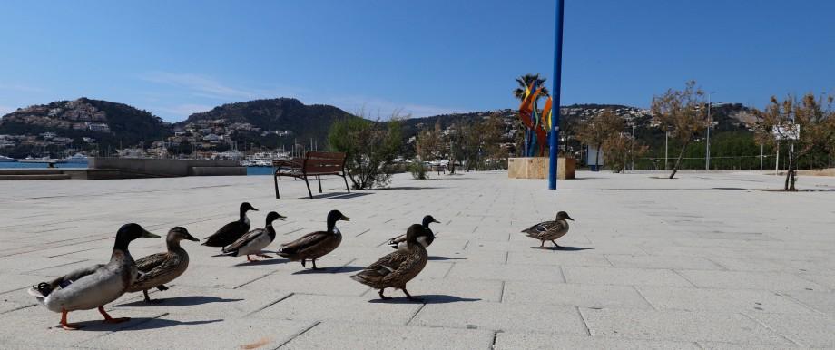 Coronavirus - Mallorca