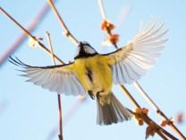 Psychologie und Artenvielfalt: So schön wie ein gutes Gehalt