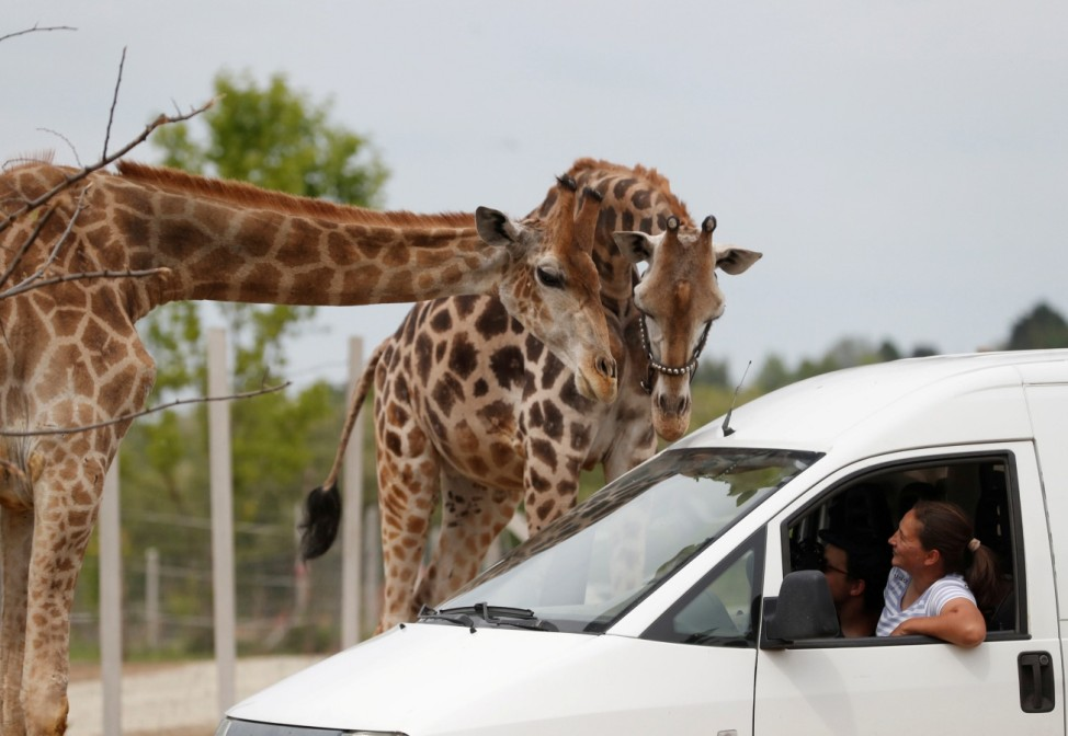 People sit in a car as the Hungarian National Circus opens a drive-in Safari Park during the coronavirus disease (COVID-19) outbreak in Szada