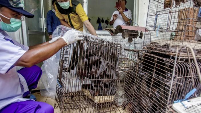 Coronaviren: Fledermäuse in einem Käfig