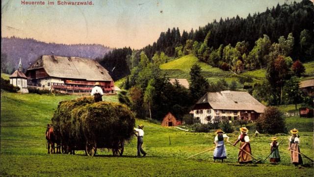 Heuernte im Schwarzwald Bauern mit Pferdekarren und Heugabeln AUFNAHMEDATUM GESCHÄTZT