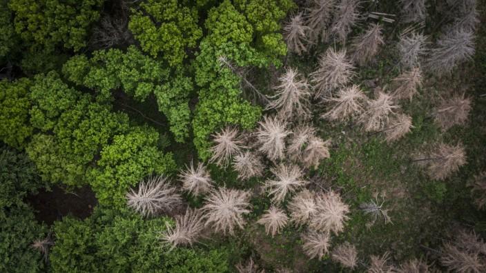 Luftaufnahme eines vom Borkenkaefer befallenen Mischwaldes bei Koenigshain, 19.05.2020. Unter anderem als Folge der tro