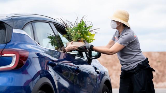 Landesgartenschau verteilt Sommerblumen