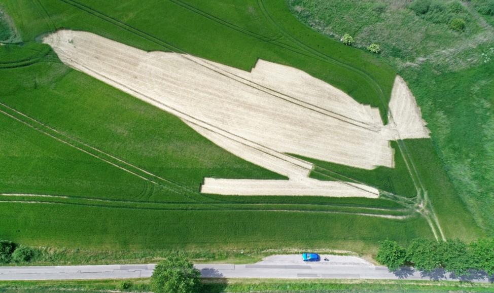 Ungewollte 'Kunst' im Getreidefeld