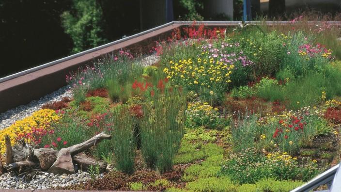 Eine natürliche Dämmung züchten - KfW-Förderung für Dachbegrünung