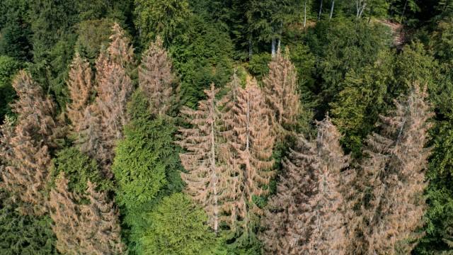 Wissenschaftler fordern Umbau des Waldes