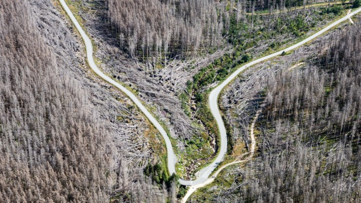 3000 Hektar Nationalpark-Wald von Borkenkäfern befallen