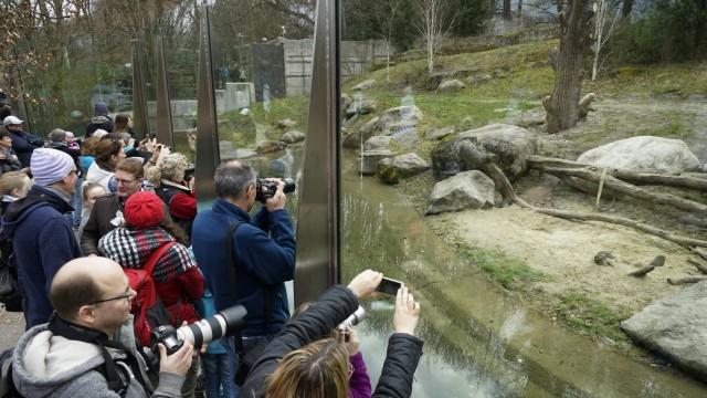 Eisbärenjunges im Münchner Tierpark Hellabrunn, 2017