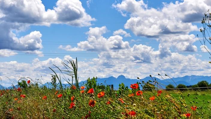 Blick in die Alpen mit Mohn bei Straußdorf