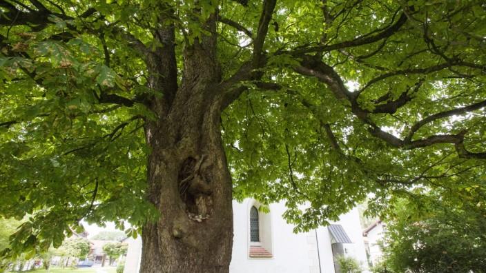 Oberhaching, Kirchplatz, grünes Oberhaching, alte Bäume
