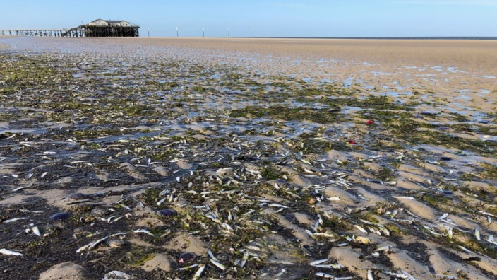 Rätselhaftes Fischesterben an der Nordseeküste