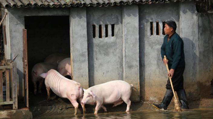 Chinesische Forscher warnen vor neuem Schweinegrippe-Virus