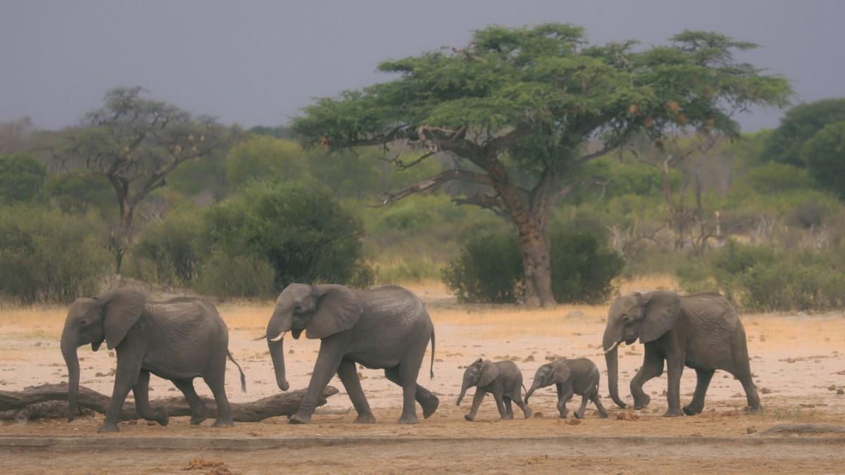 Botswana: Tod an der Wasserstelle