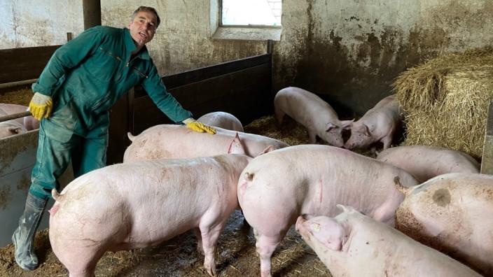 bei Schweinemäster Jürgen Dierauff aus Herbolzheim, Fotos von Jan Schmidbauer