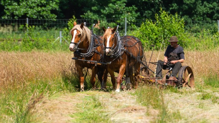 Pferde im Umwelteinsatz