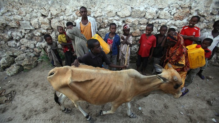 SA relief group in famine stricken Somalia SOMALIA - AUGUST 1: An emaciated cow walks past suffering Somalian people on