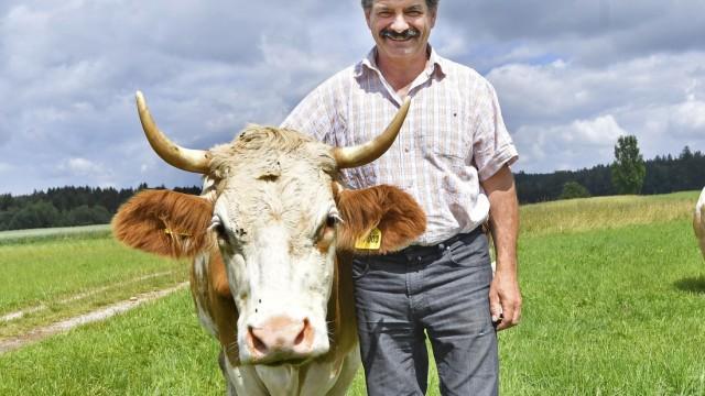 Farchach, Kühe v. Michael Friedinger