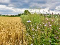 EU-Agrarpolitik: Warum Wissenschaftler einen Systemwechsel fordern