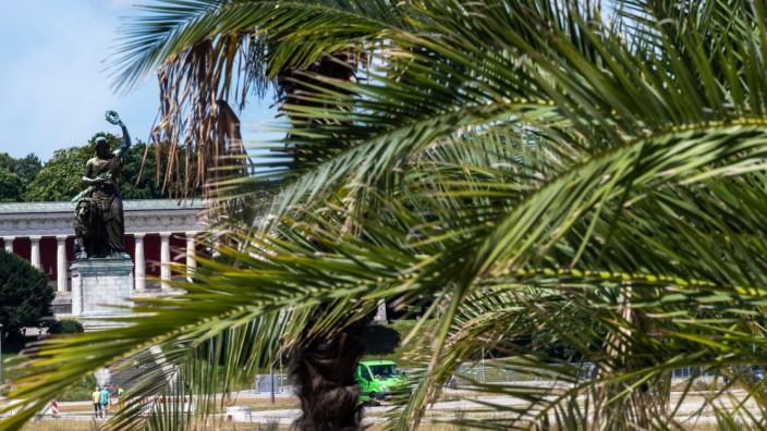 """Für den """"Sommer in der Stadt"""" sind Palmen auf die Theresienwiese gesetzt worden. Politische Aktionen sollen dort über die Sommermonate hinweg nicht stattfinden."""