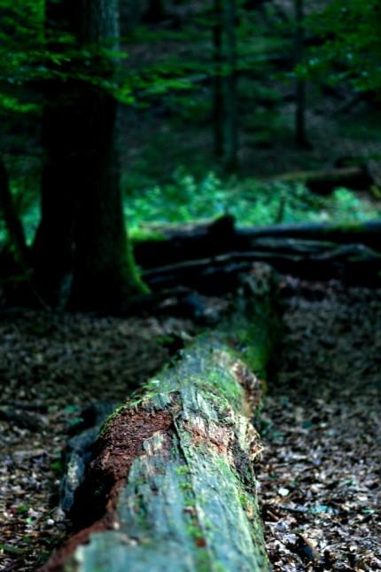 FREISING: Waldlehr-Pfad - Bäume / Baum