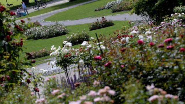 Rosengarten im Westpark in München, 2020