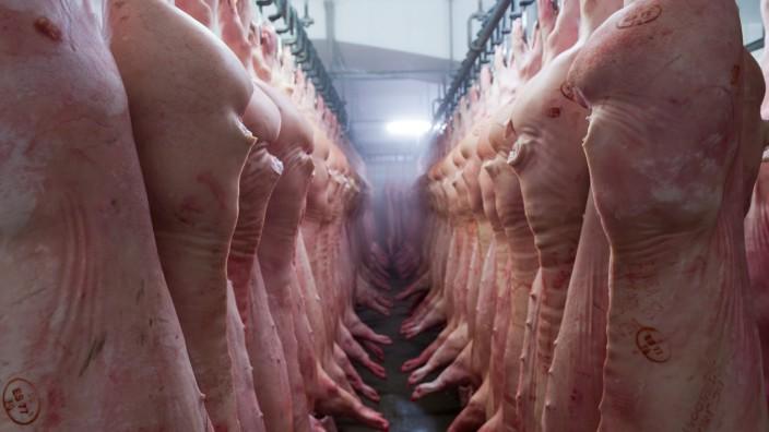 Schlachthof, frisch geschlachtete Schweine hängen in der Reihe an Haken Markthallen München