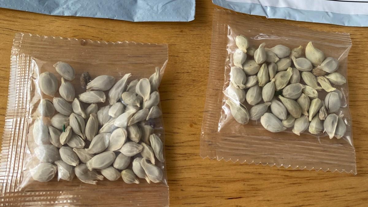 Pflanzensamen per Post: Behörden rätseln über den Absender