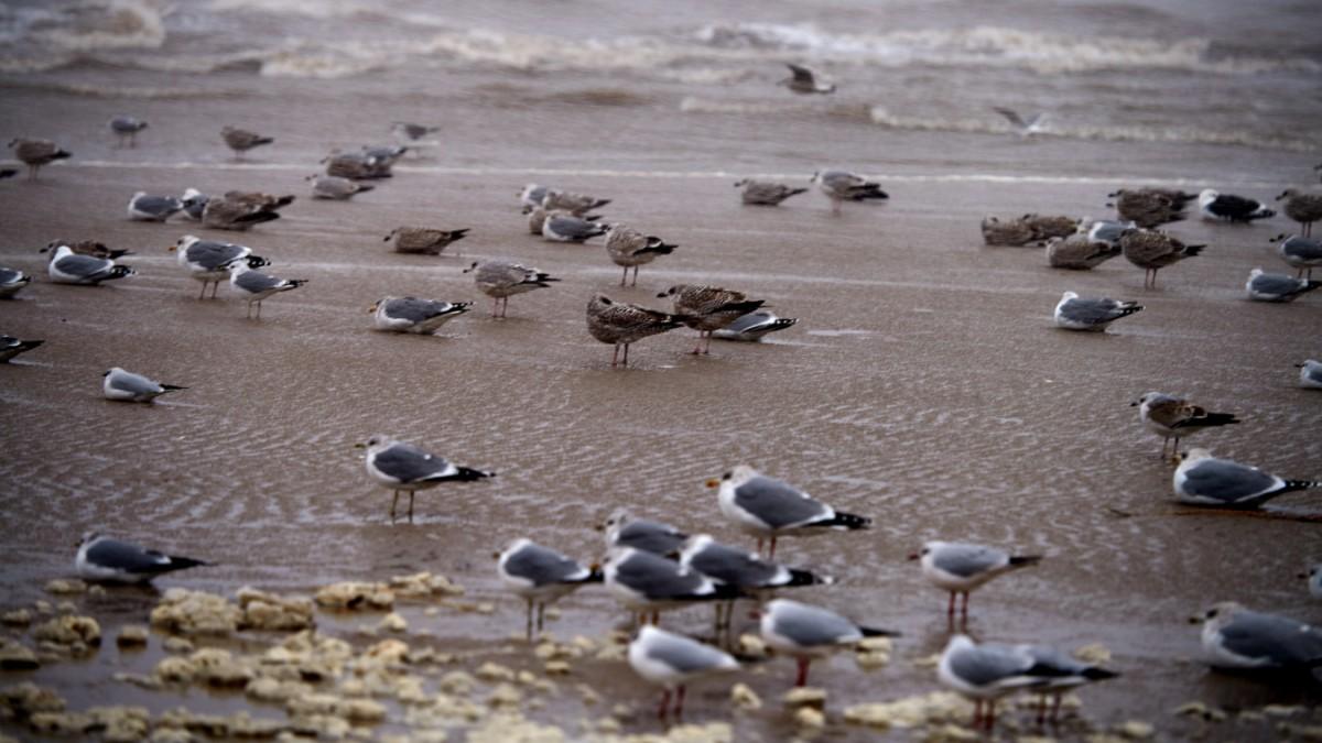 Umwelt: Der Kot von Seevögeln ist 400 Millionen Euro wert