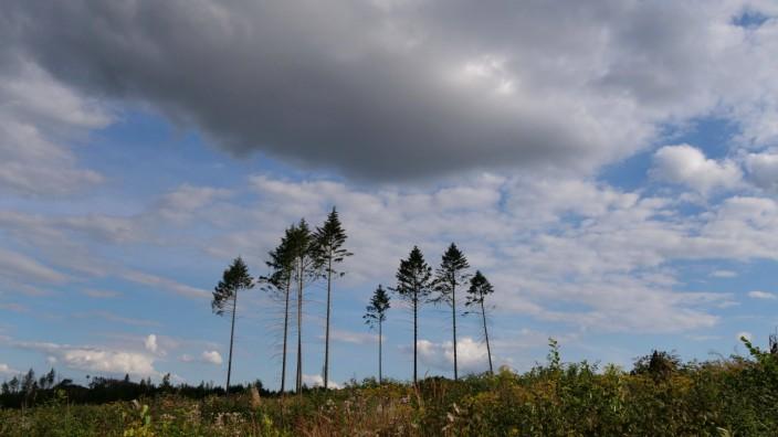Baumsterben im Solling bei Neuhaus in Niedersachsen. Baumsterben in Deutschland *** Tree dieback in Solling near Neuhau
