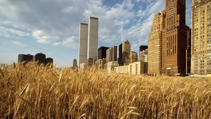 Kunst und Klima: Im Sommer 1982 legte die Künstlerin Agnes Denes ein Weizenfeld in Manhattan an, eines der ersten Werke ökologisch motivierter Land Art.