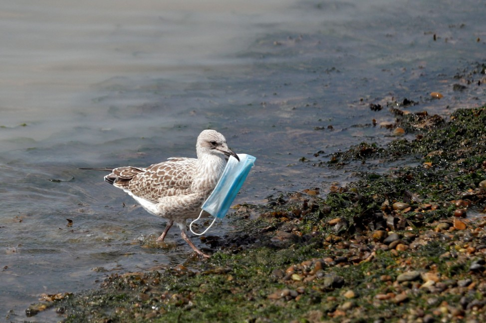 A seagull carries a protective face mask at the port of Dover