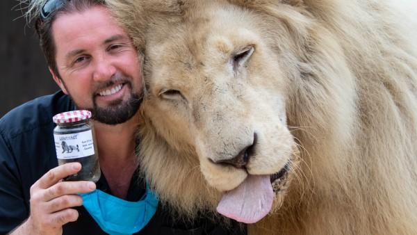 Nach Vorwürfen von Tierschützern überprüft Zirkus Löwen-Kot