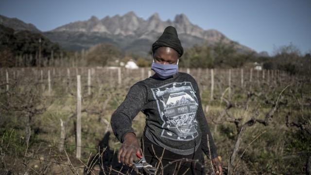 Südafrika: Die Corona-Krise trifft auch Arbeitsplätze im südafrikanischen Weinbau. Vor allem kleine Betriebe geraten unter Druck.