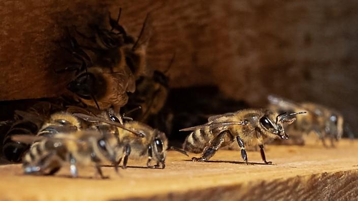 Honig aus dem Bundestag