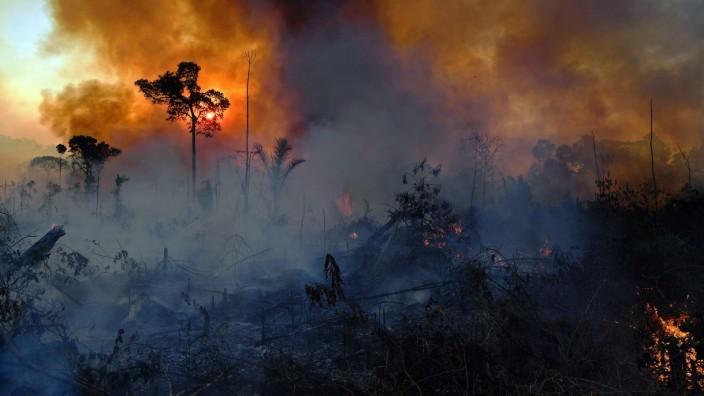 Freihandelsabkommen Mercosur: Brasilianischer Regenwald wird illegal niedergebrannt, auch um Raum für die Rinderzucht zu schaffen.