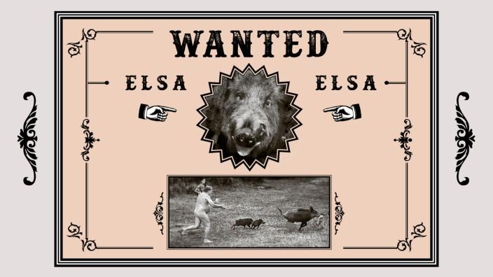 Panorama, 22.8.2020, Wanted: Die Sau Elsa, die ein Laptop geklaut hat