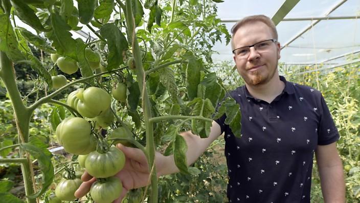 Botanik: Thorsten Thron widmet sich seit zehn Jahren der Zucht alter Tomatensorten.