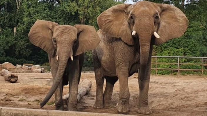 Elefanten aus Berlin für den Opel-Zoo