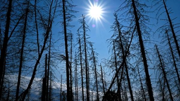 UN:Corona-Pandemie bremst Klimawandel nicht nachhaltig aus